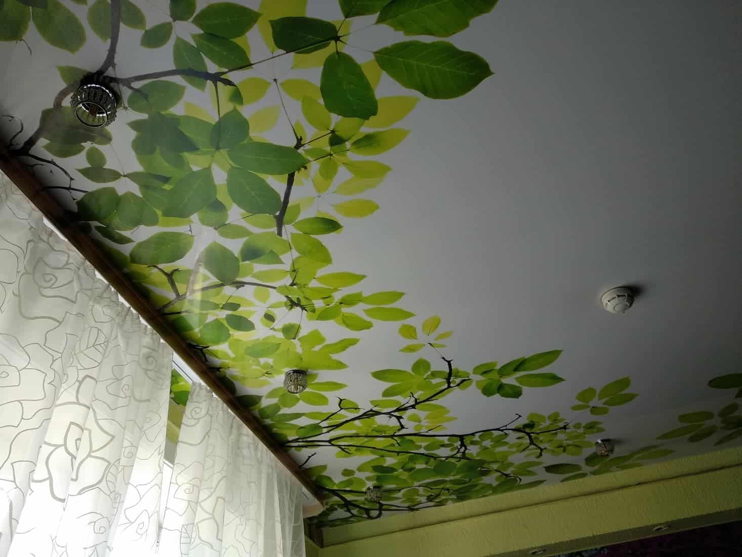 натяжные потолки фото, фотопечать растения
